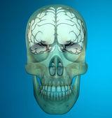 X-ray image of human skull — Stock Photo