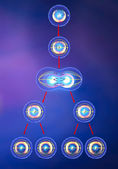 Illustration of meiosis — Stock Photo