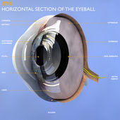 Section of the human eyeball — Stock Photo