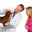 Veterinarian: Showing Owner Dog's Teeth — Stock Photo