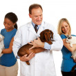 Stock Photo: Veterinarian: Vet Team Looks at Animals