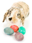 Easter: Easter Bunny With Colorful Easter Eggs — Stok fotoğraf