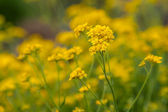 Yellow Flower — Stockfoto