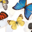 Stock Photo: Background with butterflies