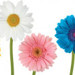 white background witm multicoloured flowers — Stock Photo
