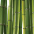 Stock Photo: Texture of bamboo stalks