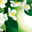 Stock Photo: White flowers on green background