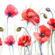 Red poppies on white background — Stock Photo