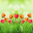 Stock Photo: Red tulips on green background