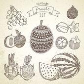 Tasty fruit set in vector — Stock Vector
