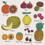 Lumineux fruits et baies en vecteur. — Vecteur