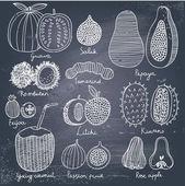Tropical fruit set in vector. — Stock Vector