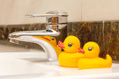 Yellow rubber duck — Stock Photo