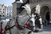 Horse and cart — Stock Photo