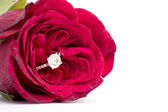 Red rose with engagment ring — Stock Photo