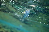 Fish in the Red Sea — Stock Photo