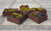 Flowerpots with flowers on the pavement — Stock Photo