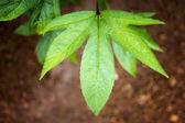 Green leaf vine on the ground — Stock Photo