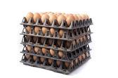 Wiele brązowe jaja na białym tle — Zdjęcie stockowe