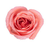Background image of pink roses — Stock Photo