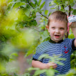 Little boy photographed in the garden — Photo