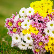 Beautiful bouquet of colorful flowers — Stockfoto