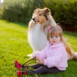 Little girl playing with a dog Collie — Stock Photo