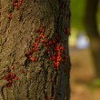 Stock Photo: Red beetle on tree trunk