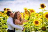 Newlyweds hugging in sunflowers — Stock Photo