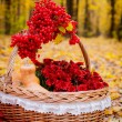 Basket with berries,fruits and flowers — Stock Photo