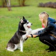 Stock Photo: Womand dog in park