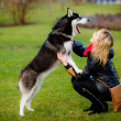 Stock Photo: Womand dog