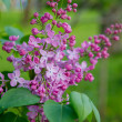 Spring lilac flowers — Stock Photo #39476047