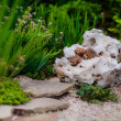 Landscape design — Stock Photo #39476339