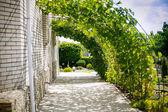 Vineyard in garden — Stock Photo