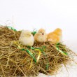 Stock Photo: Chickens in manger