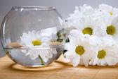 White chrysanthemums and vase — Stock Photo