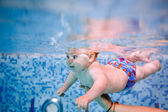 Baby diving in the swimming pool. — Стоковое фото