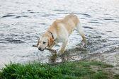 Treinamento do cão — Foto Stock