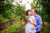 Pregnant woman with  husband  between rowan trees — Stock Photo