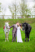 The bride and groom with horses — 图库照片