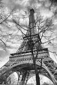 The Eiffel Tower in the branches of the tree. — Stock Photo
