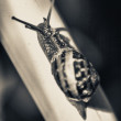 Stock Photo: Stiff climb of snail