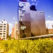 Tufts of grass between the buildings, NYC — Stock Photo