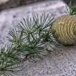 Stock Photo: The pine