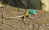 Bright color lizard (pangolin) on a tree — Stock Photo