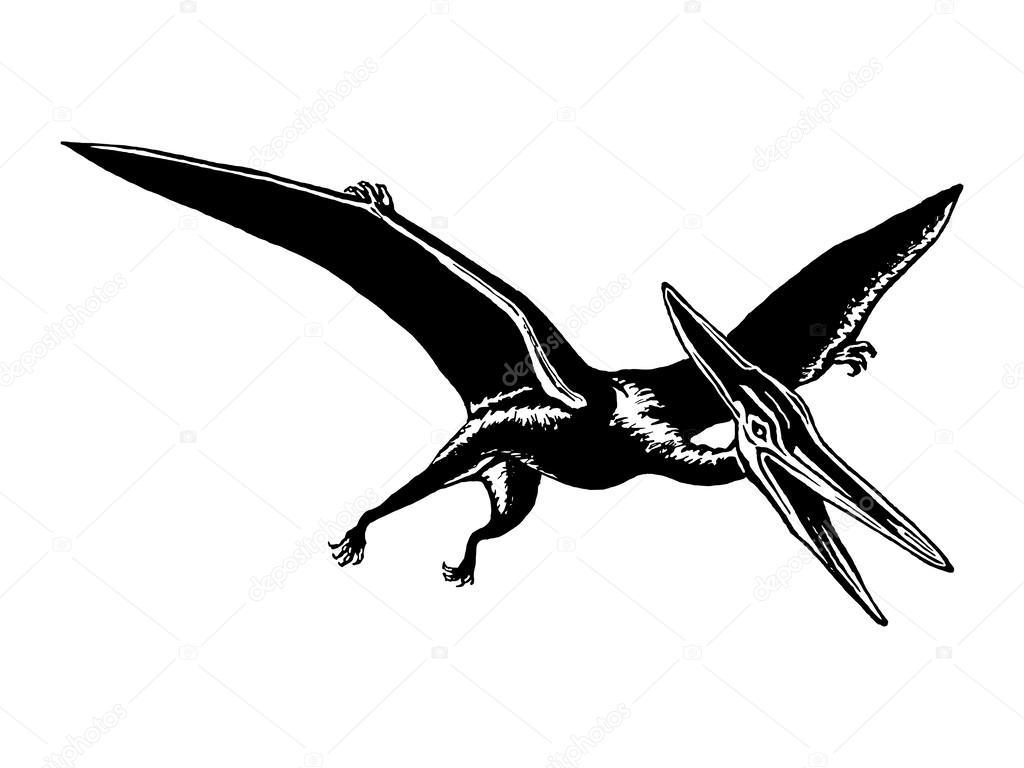 翼龙— 图库矢量图像08