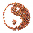 Yin-yang shape made of hazelnuts isolated — Stock Photo