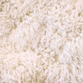 White fur as abstract background — Stock Photo