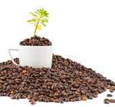 Green plant growing from the coffee beans — Stock Photo